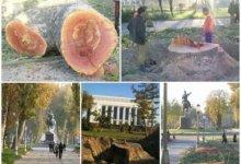 Photo of «Ситуация близка к кризисной». Эксперт об экологии Ташкента, вырубке деревьев и отношении людей