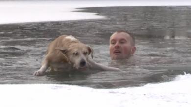 Photo of В Белгородской области журналист снимал сюжет про уток и спас тонувшую собаку