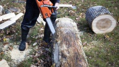 Photo of В Узбекистане планируют продлить мораторий на вырубку деревьев