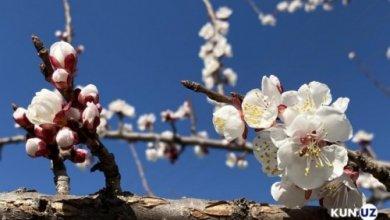 Photo of Синоптики рассказали о погоде в Узбекистане 1 марта