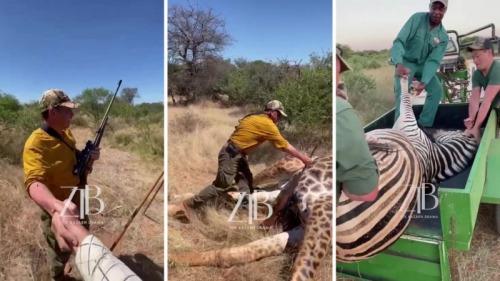 Photo of В Минэкологии ответили охотникам, защищающим отстрел животных в Африке