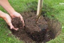 Photo of Метро строят – щепки летят. Не погибнут ли деревья, пересаженные в летний зной?