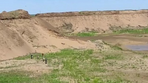 Photo of Сельчане получили песчаный карьер вместо пастбища в Акмолинской области