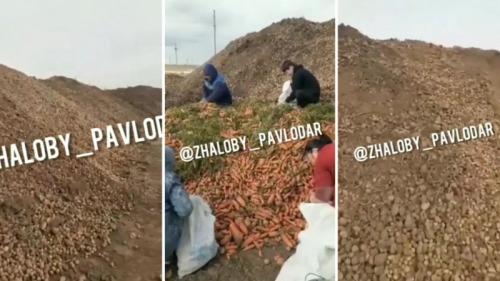 Photo of Горы картофеля и моркови выбросили в степи Павлодарской области