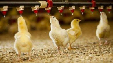 Photo of Минсельхоз устранит дефицит рабочих рук в сельском хозяйстве с помощью узбеков
