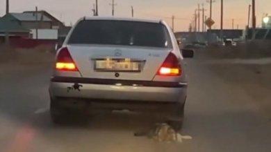 Photo of «Привязал и протащил собаку в Уральске»: водитель избежал наказания